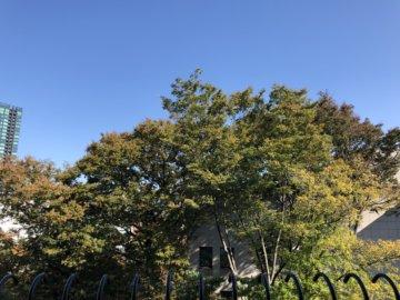 港区麻布十番駅(東京)近くにカウンセリングルームを準備中!の画像